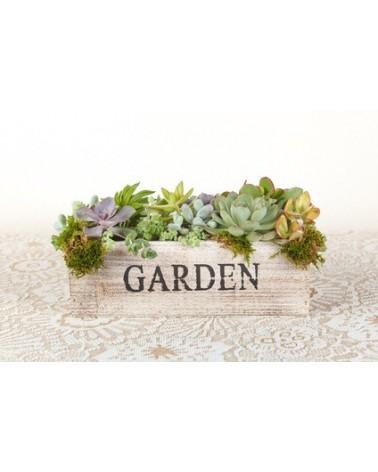Abri : Succulent Garden bain 002