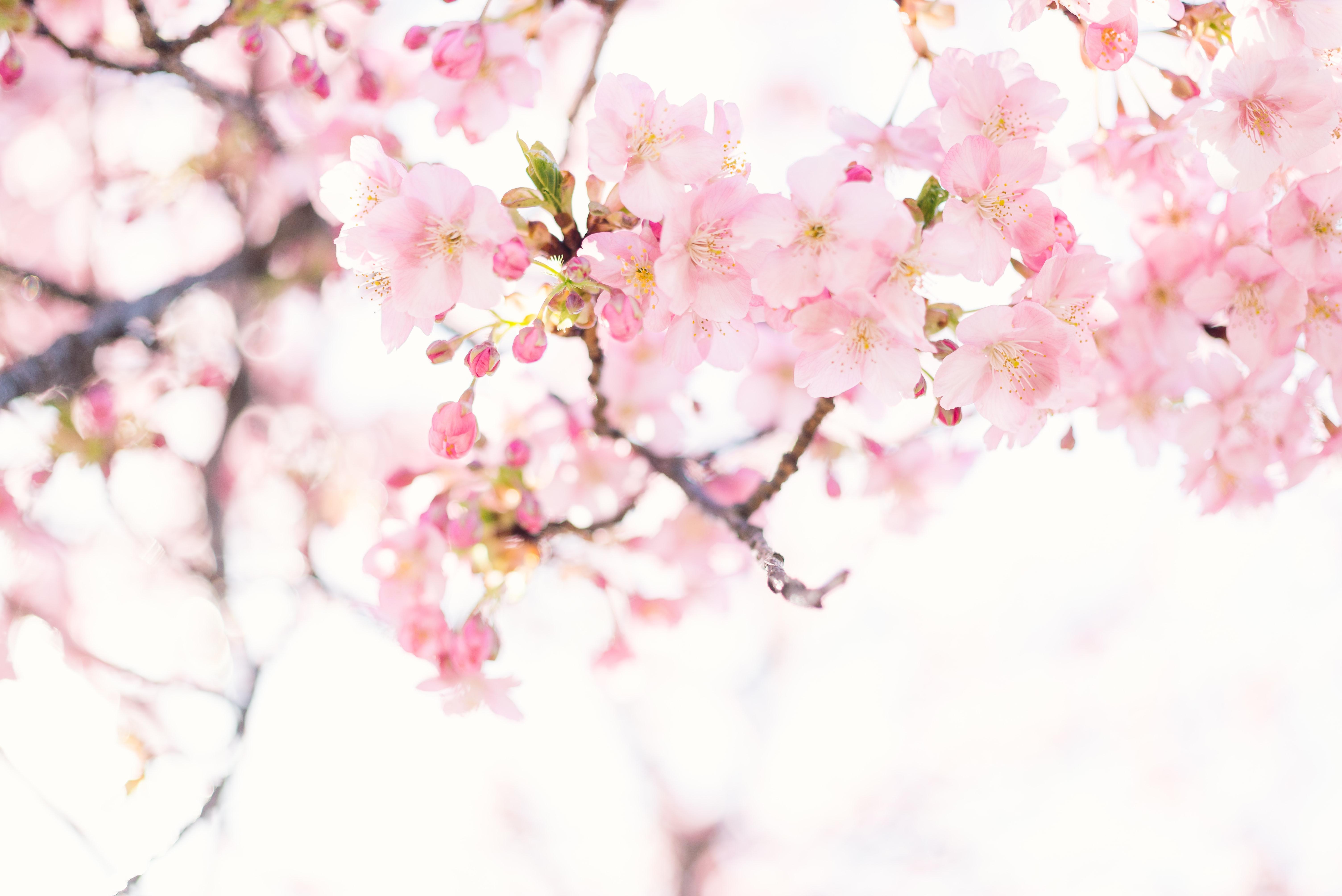 masaaki-komori-_SbeCWYjwCQ-unsplash.jpg