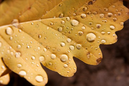 Le froissement des feuilles mortes
